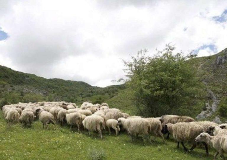 Skema Kombëtare/ Mbi 700 fermerë nga qarku i Beratit aplikuan për subvencione