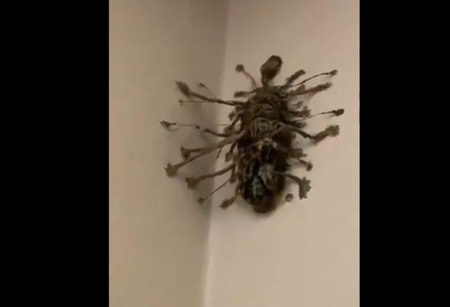 Shkon per pushime dhe gjen kete krijese në murin e dhomës se hotelit, pamjet behen virale: A e di dikush se çfarë është kjo..