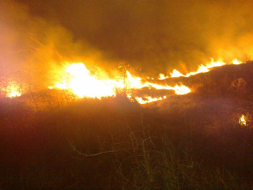 Zjarr i qëllimshëm në Berat, digjen 3 hektarë me shkurre dhe dëllinja, ndërhyrja e zjarrfikësve e vështirë