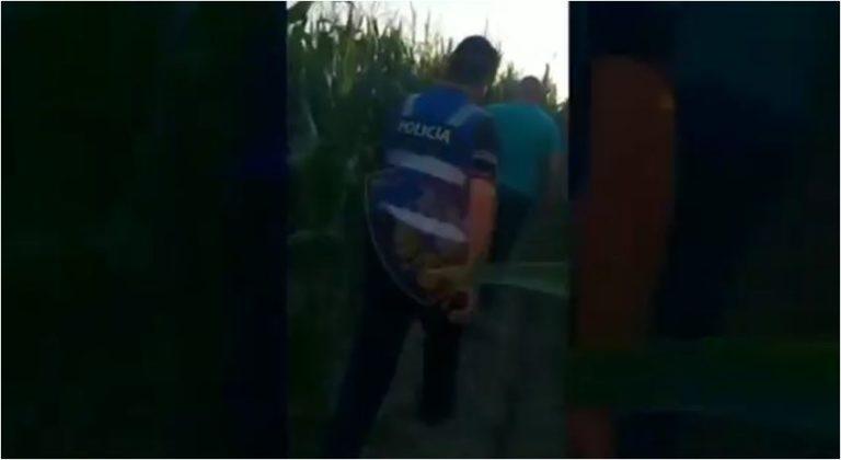 """""""Në Fier lulëzon hapur kanabisi"""", Policia reagon pas akuzave: Futet brenda parcelave të misrit (VIDEO)"""